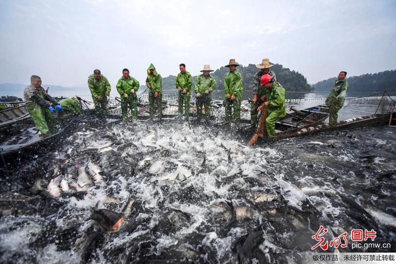 江西新余:仙女湖结束三个月的休渔期迎来开捕季